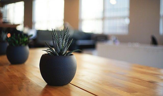 ラッキーアイテム「観葉植物」の画像