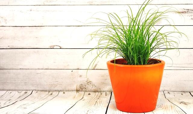 今日のラッキーアイテム「植木鉢」