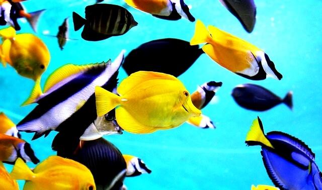 今日のラッキーアイテム「熱帯魚」