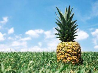 今日のラッキーアイテム「パイナップル」