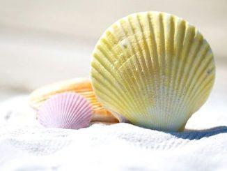 今日のラッキーアイテム「貝殻」