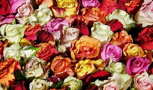 ラッキーアイテム「花」の画像