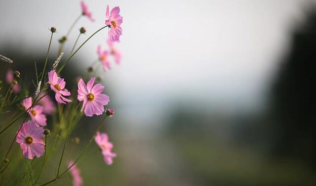 今日のラッキーアイテム「花」