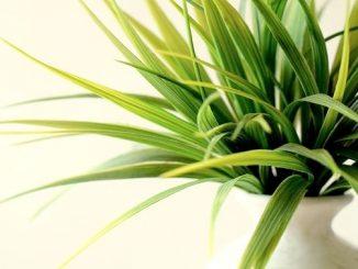 今日のラッキーアイテム「観葉植物」