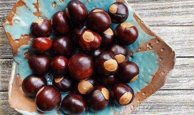 今日のラッキーアイテム「季節の食べ物」