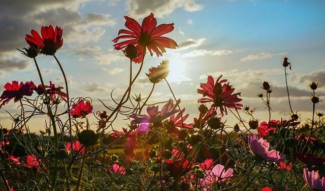 今日のラッキーアイテム「季節の花」