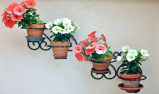 今日のラッキーアイテム「鉢植え」