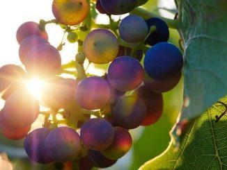 今日のラッキーアイテム「季節の果物」