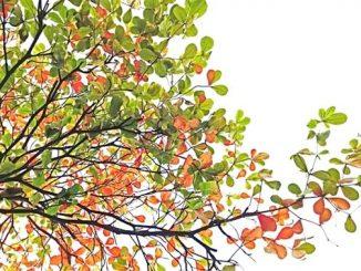 今日のラッキーアイテム「樹木」